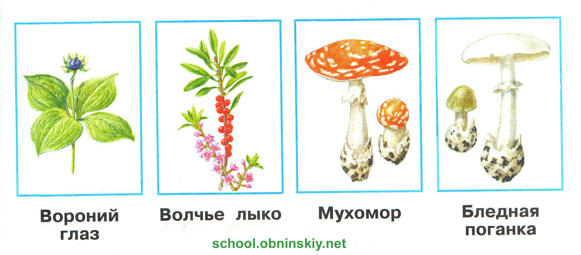 Описание: http://school.obninskiy.net/data/uploads/okr_mir/okrmir_kl2_ch2_16.jpg