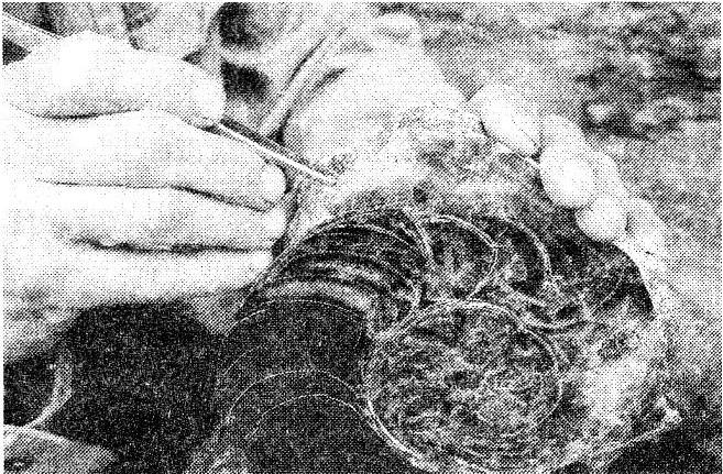 Как называют специалиста-зоолога, объектом изучения которого являются изображённые на фотографии остатки животных